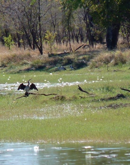 Birdlife On Billabong, Burke Developmental Road Channel Country Queensland