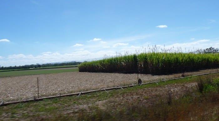 Sugar Cane Near Mareeba, Burke Developmental Road Channel Country Queensland