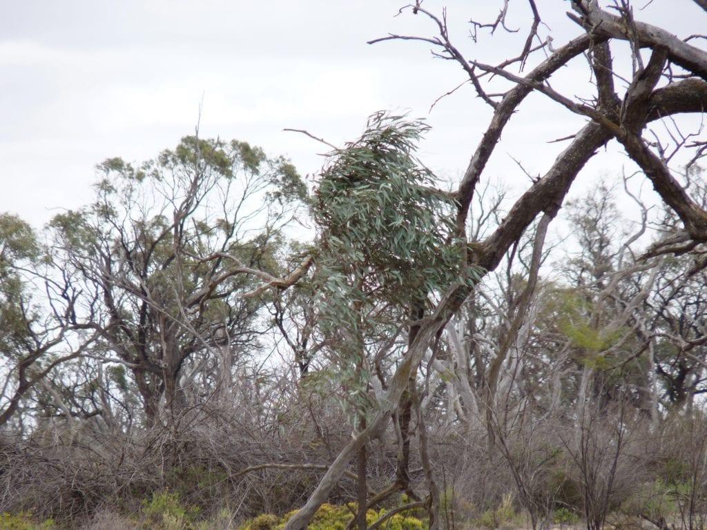 Banrock Station Wetlands South Australia