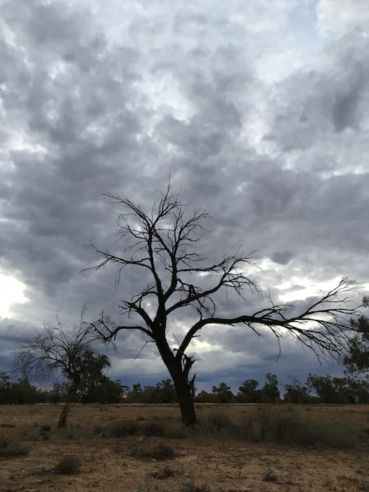 Twisted Gum, Camping Paroo River