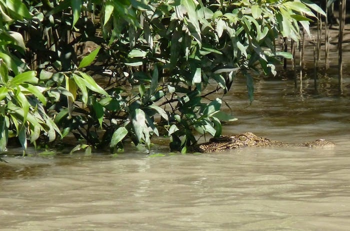 Saltwater Crocodiles - Jumping Croc Tour, Adelaide River NT