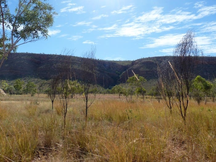 King Leopold Range and spinifex plains, Mornington Wildlife Sanctuary.