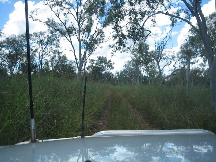 The old Wyndham to Halls Creek Road is quite overgrown. Wyndham Western Australia.