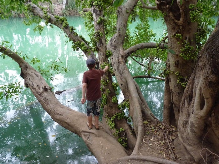 A bough hanging over the water - too tempting to resist! Adels Grove.