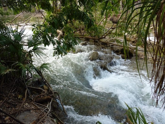 This gives you an idea of the volume of water flowing down Lawn Hill Creek. Adels Grove.