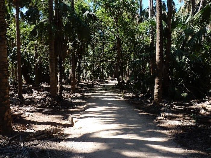 Walking into a tropical paradise, Mataranka Thermal Pools.