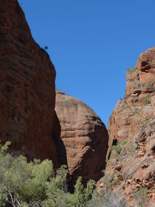 A tiny (mini?) palm on top of the cliff, Mini Palms Gorge, Purnululu National Park.