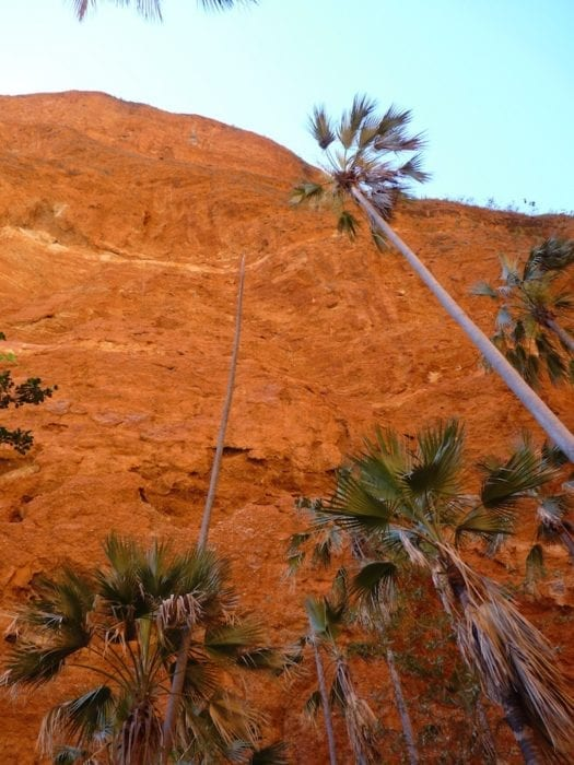 Sheer cliffs, Mini Palms Gorge, Purnululu National Park.