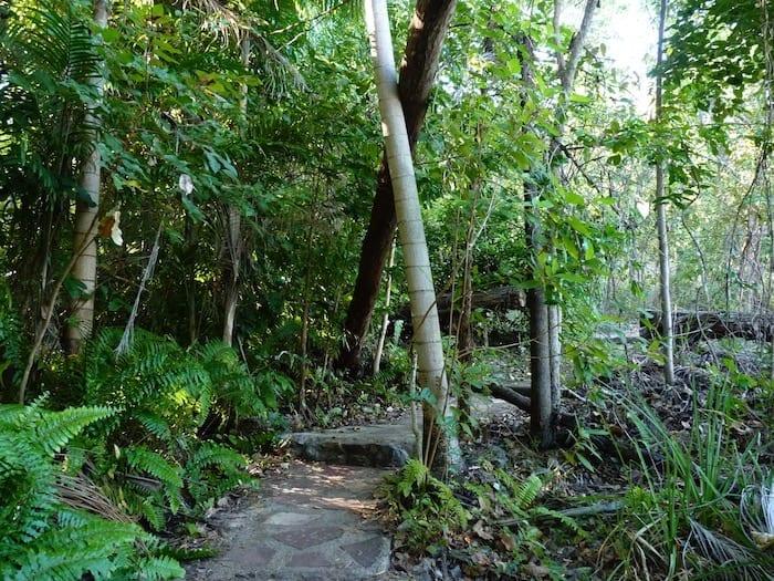Rainforest walk at Wangi Falls, Litchfield National Park.