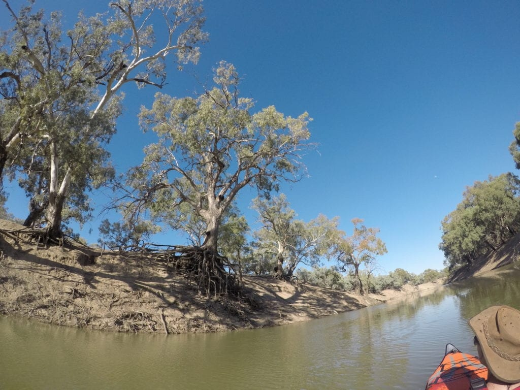River red gums on the Darling River. Inflatable Kayaks.