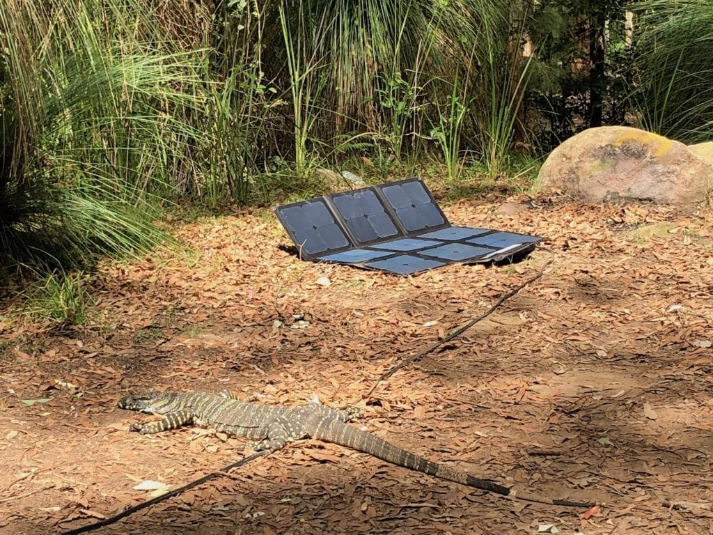 Goanna guarding our solar blanket. Gap Creek Campground, Watagans National Park.