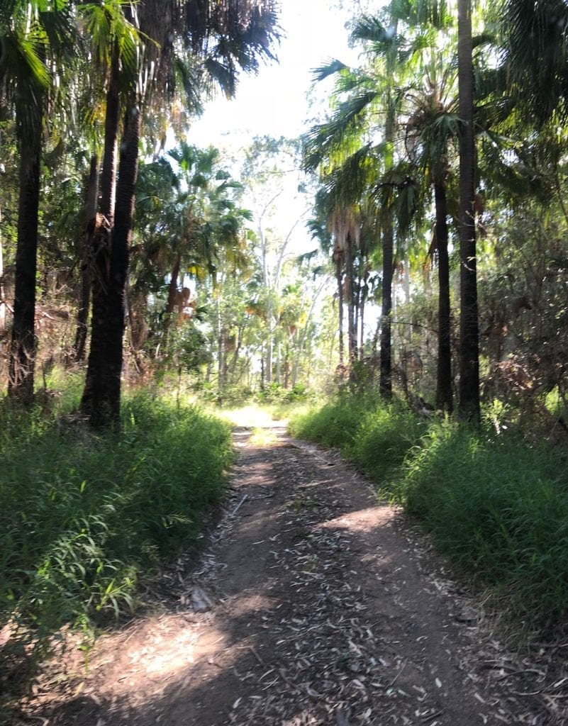 The track out of Cracow Beach QLD.
