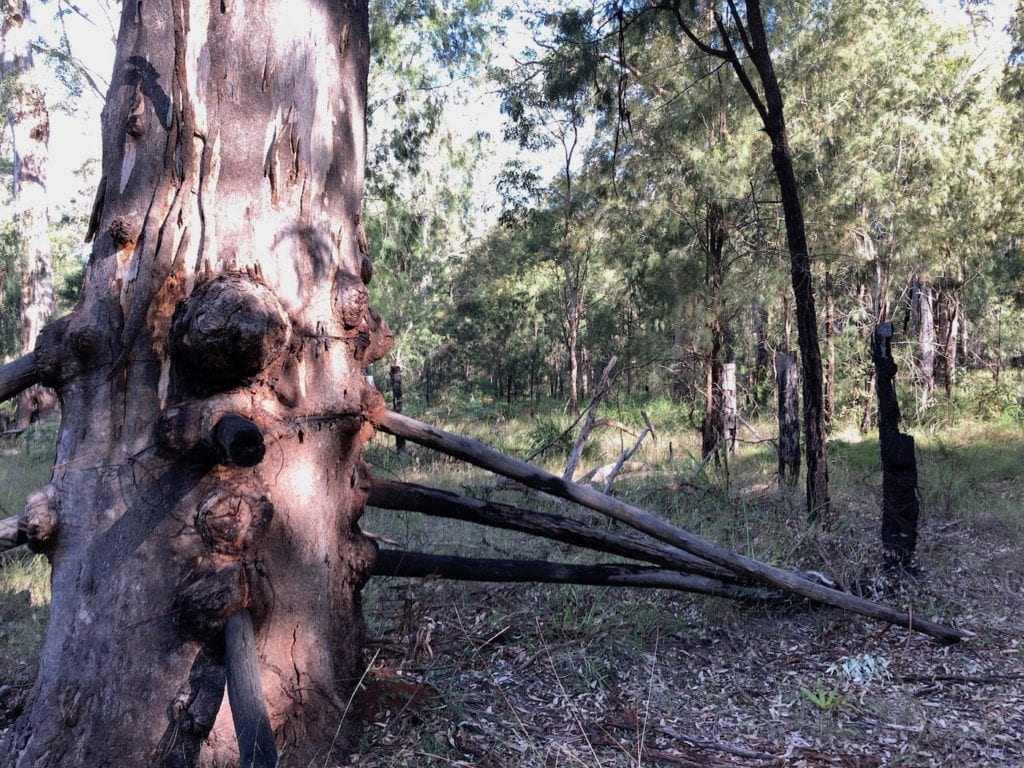 Remnants of old stock yards. Walks In Blackdown Tableland NP.