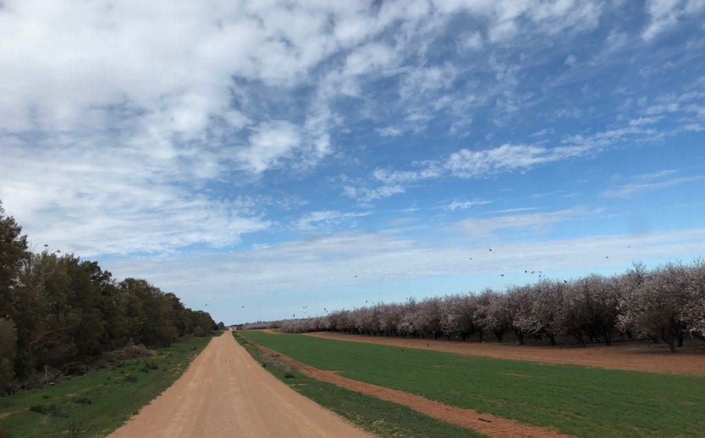 Apple trees blossoming at the Renmark end of the Old Mail Road. Murray Sunset National Park.