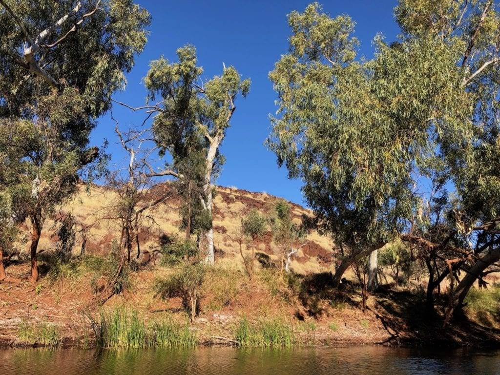 Just a few metres away from the cooling waters of Carawine Gorge, you'll encounter the arid terrain of the East Pilbara.
