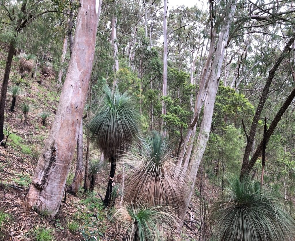 A steep climb on the Ridge Track walk. Main Range National Park.