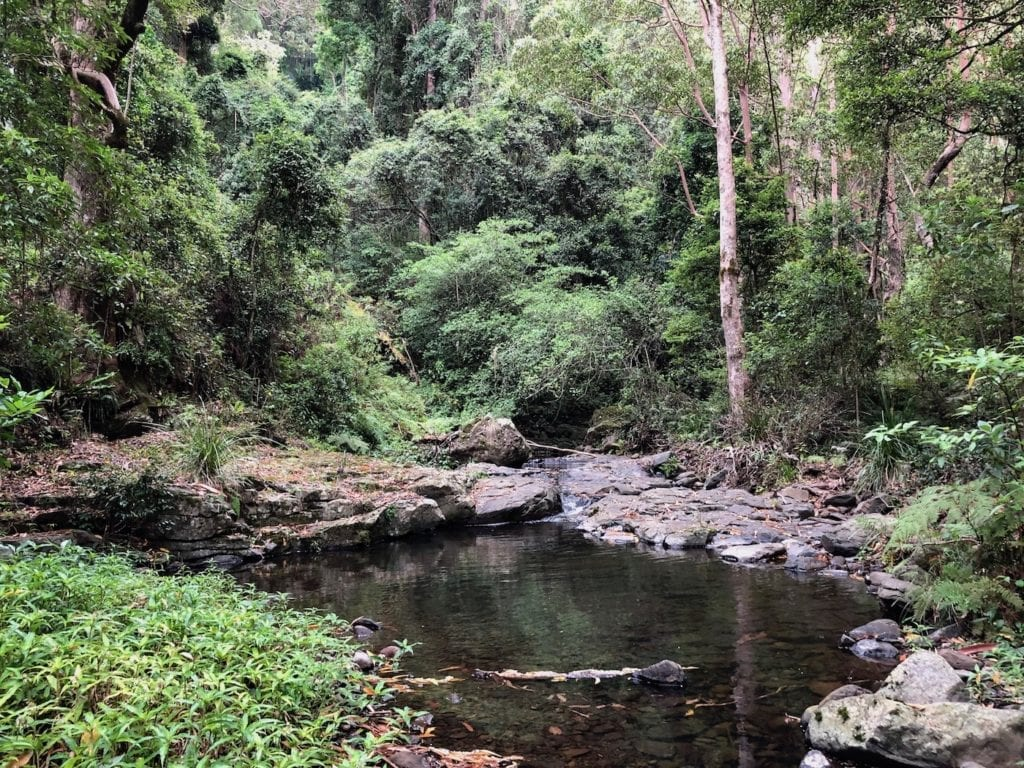 There are many pristine pools in Dalrymple Creek. Cascades rainforest walk.