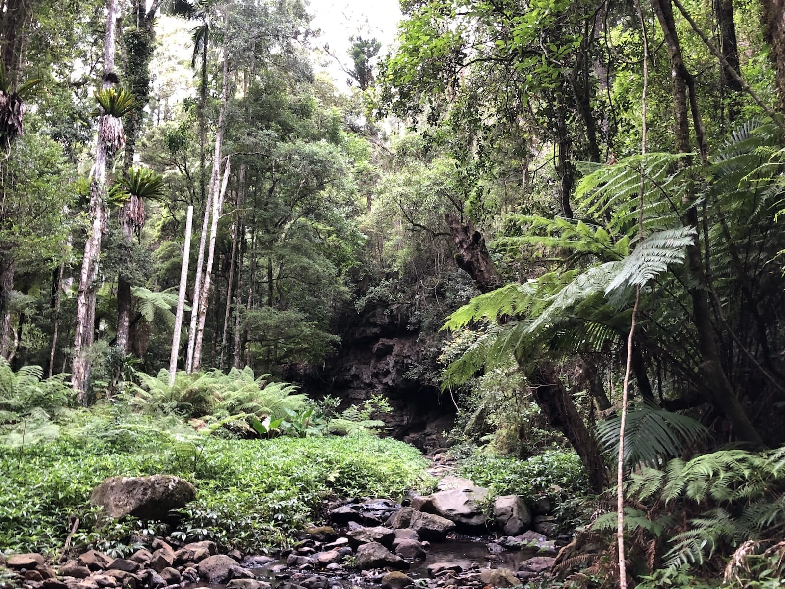 Dalrymple Creek cuts through the rainforest on the Cascades rainforest walk.