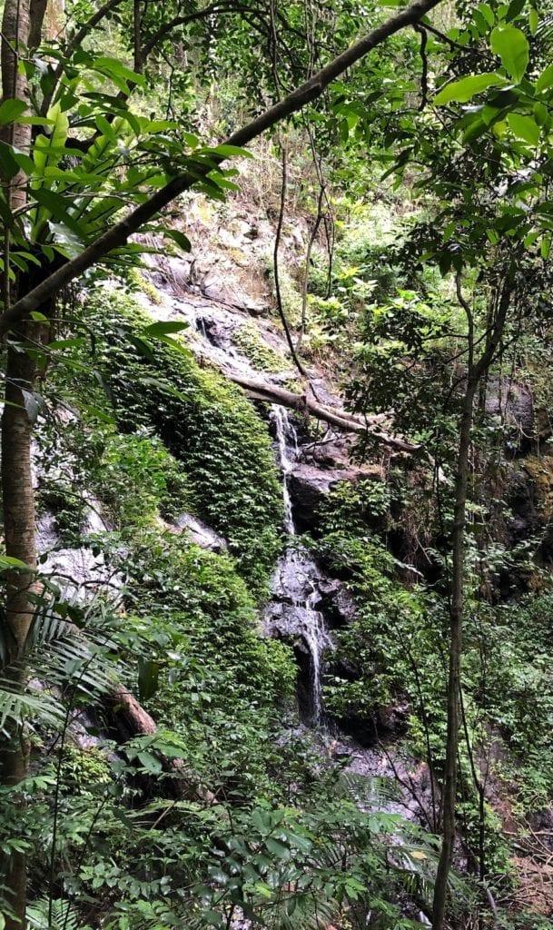 Cascade Falls on the Cascades rainforest walk.