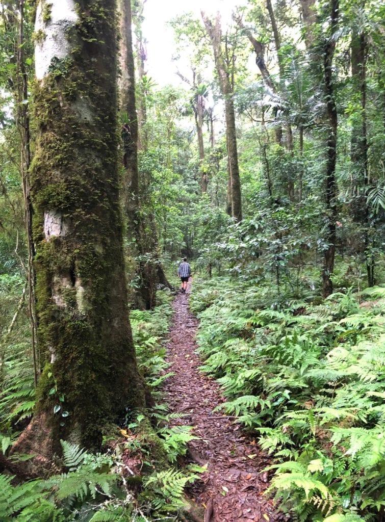 Walking through Gondwana Rainforest in Main Range National Park.