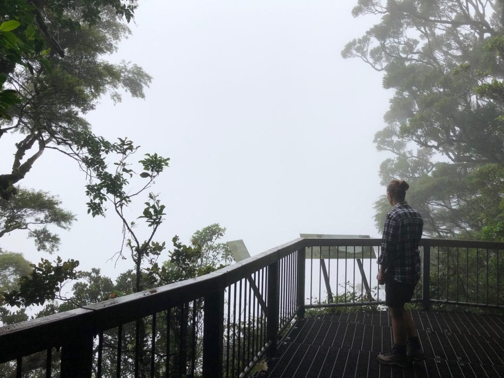 Sylvester's Lookout was a wall of fog. Main Range National Park, Gondwana Rainforest.