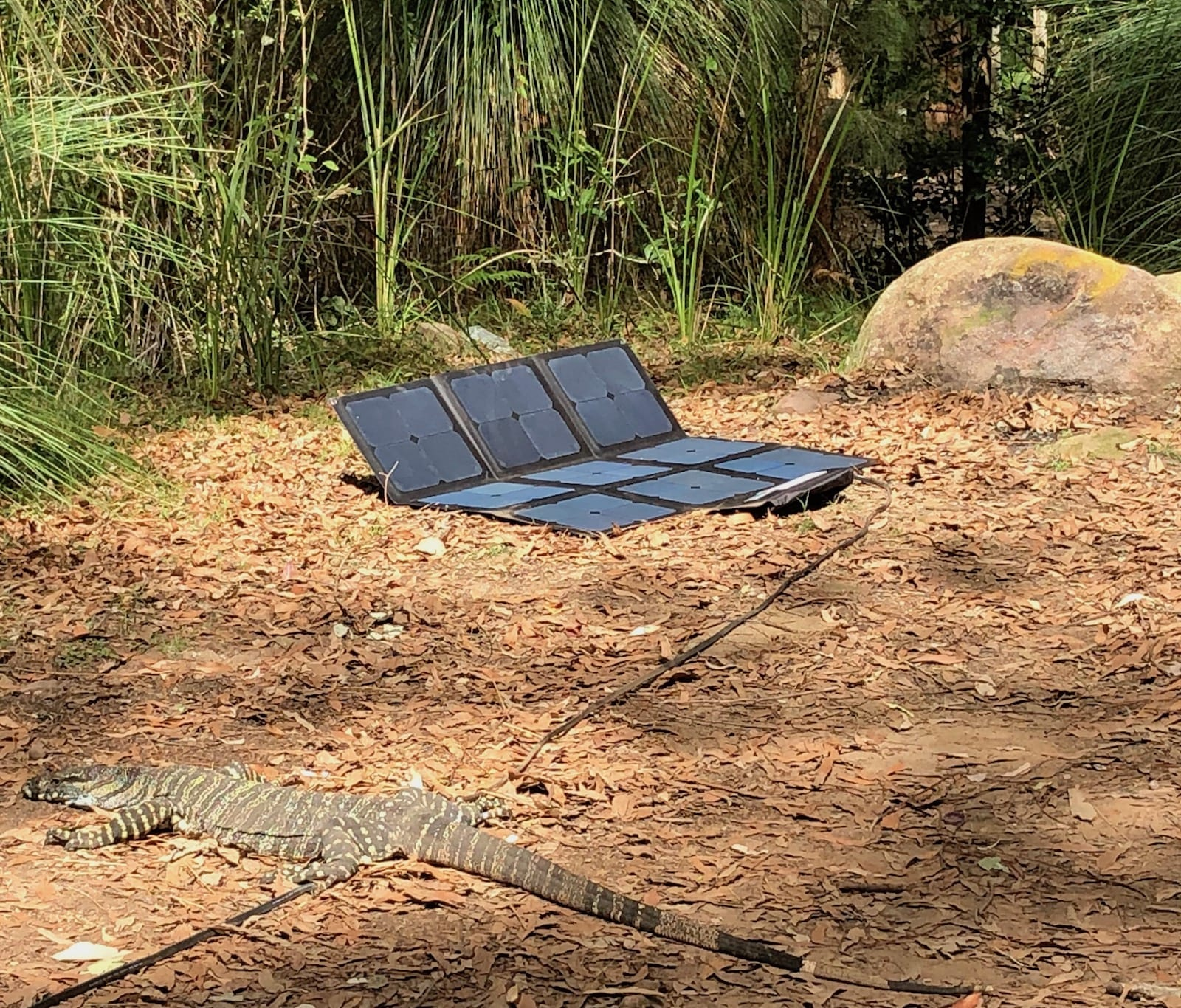 Our REDARC solar blanket with a goanna on the extension lead.