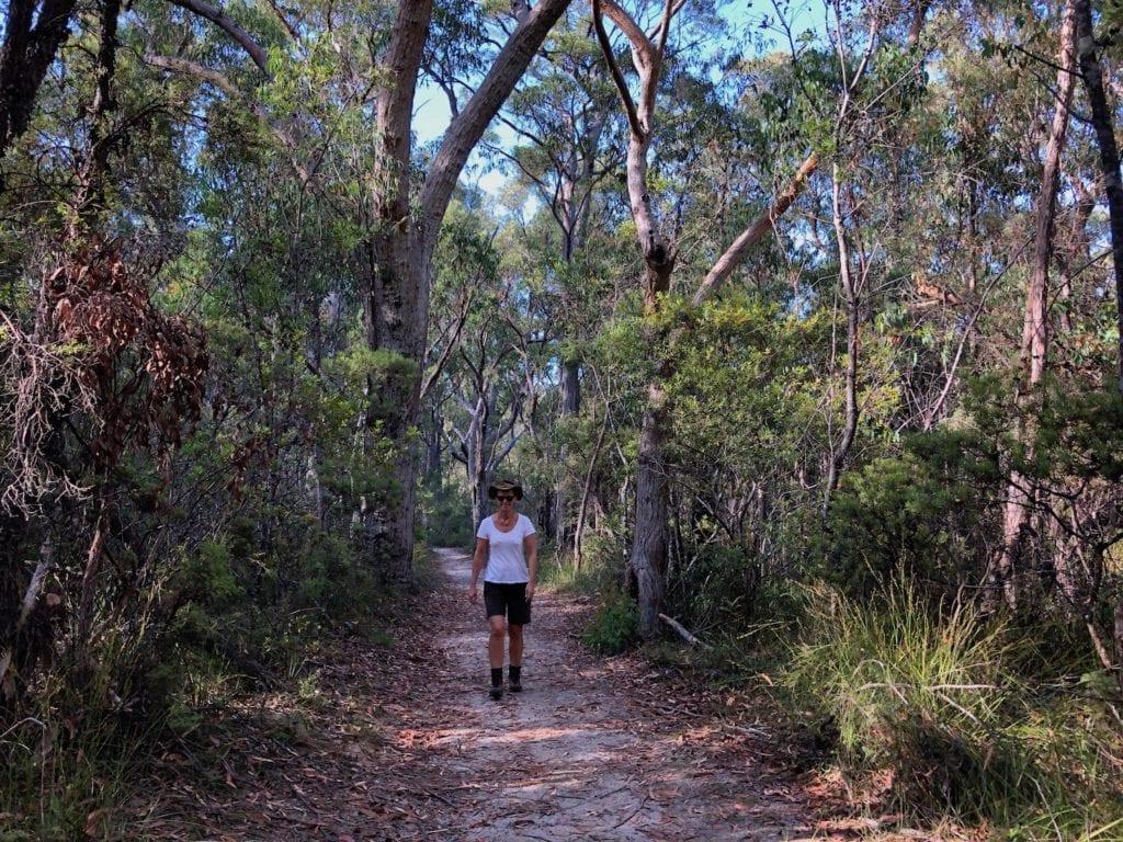 Walking through the dry eucalypt forest on the Needles Walk, Gibraltar Range National Park.