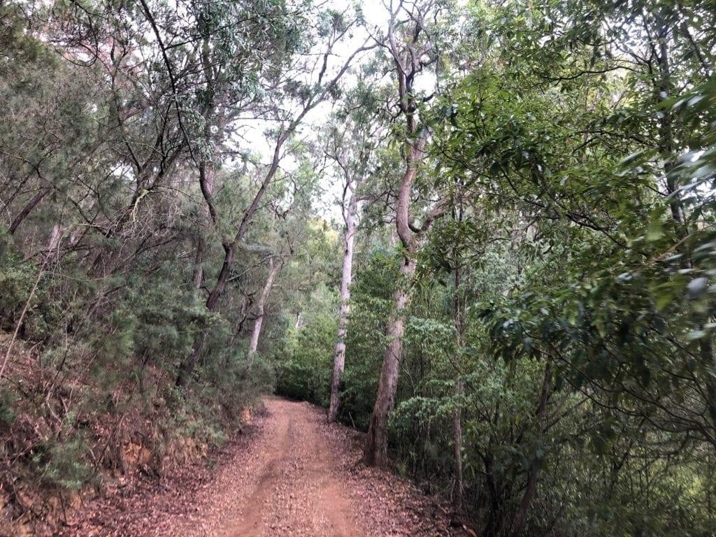 Bourkes Road, Wadbilliga National Park.