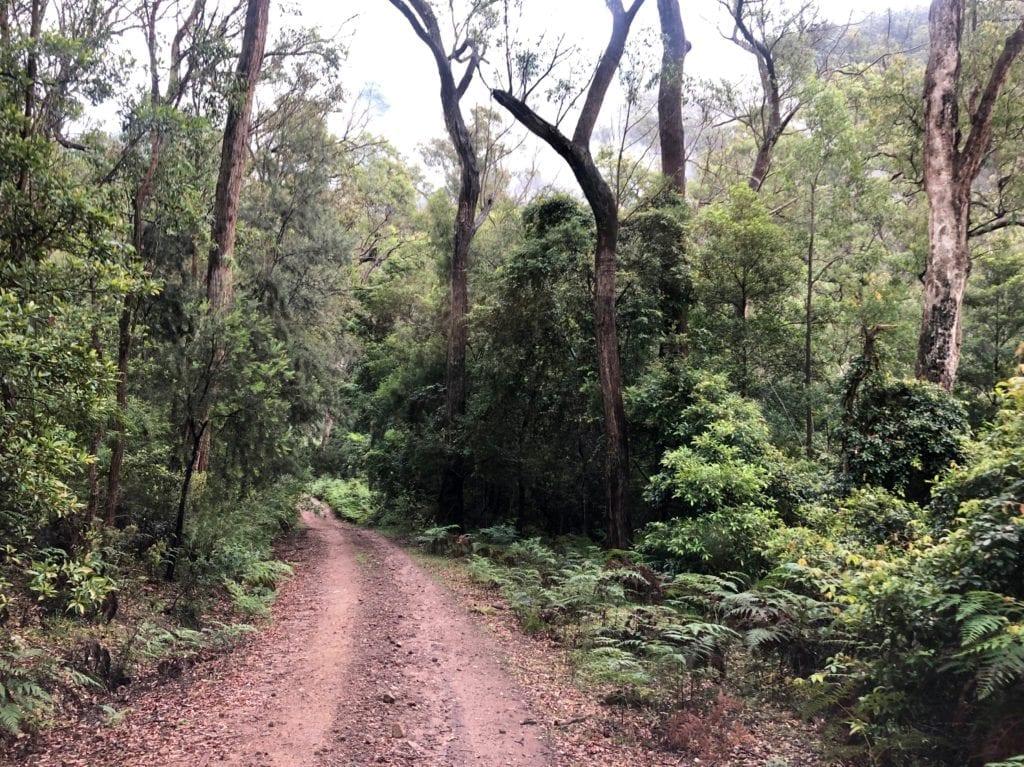 Sub-tropical rainforest, Wadbilliga National Park.