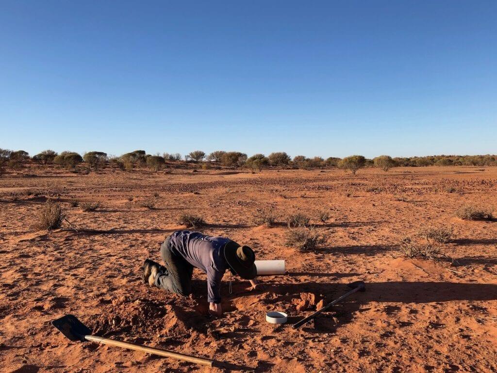 Digging pitfall traps. Australian marsupials.