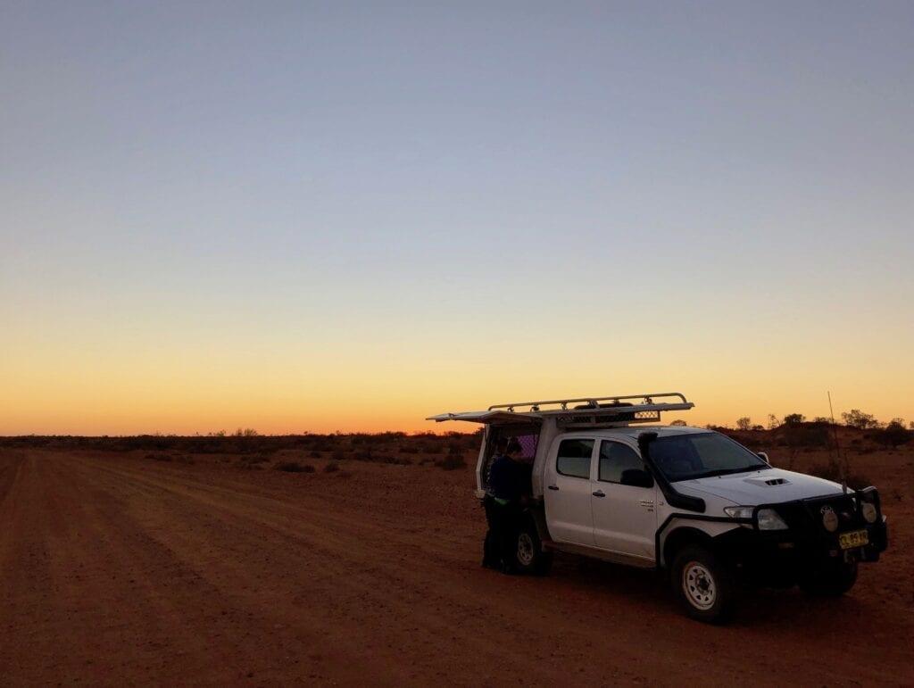 Sunrise at Wild Deserts. Australian marsupials.
