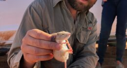 A Glimpse Into The World Of Tiny Australian Marsupials & Reptiles