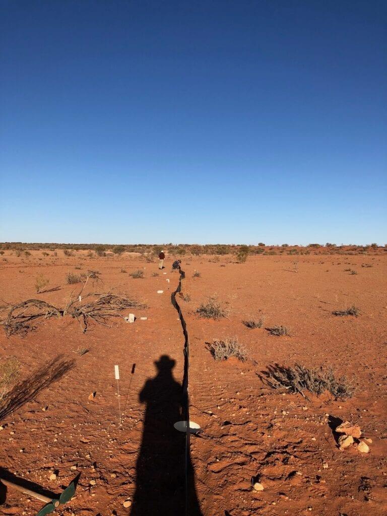 A completed pitfall trap. Australian marsupials.
