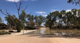 Cooper Creek In Flood 2019 | Innamincka Causeway, SA