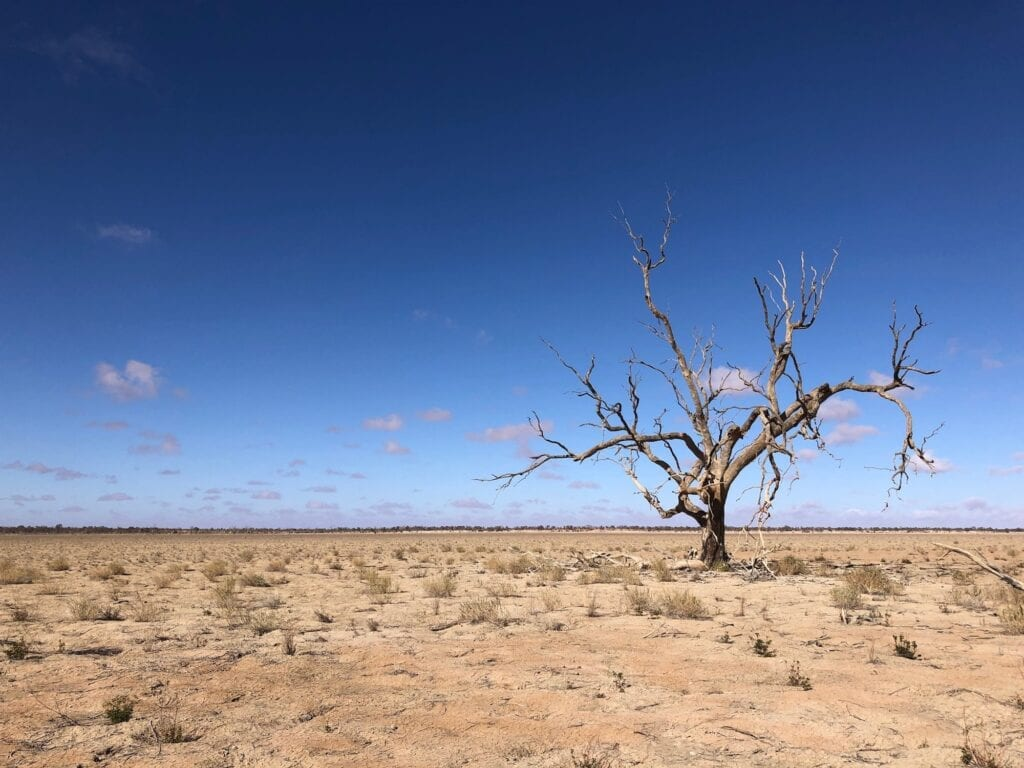 Dead coolabah tree on the lake bed. Lake Pinaroo, Sturt National Park NSW.
