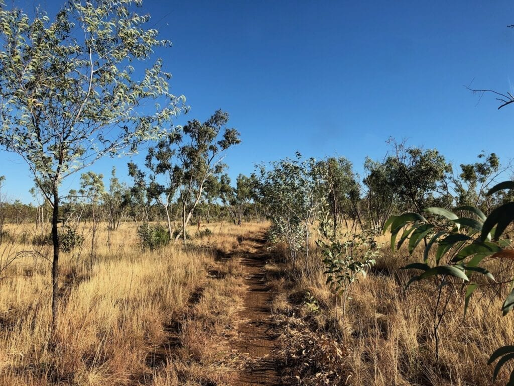 The tracks through the southern end of Judbarra / Gregory National Park are nothing more than rough two-wheel tracks through the scrub.